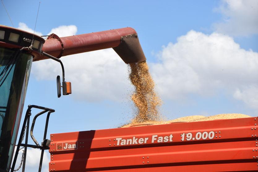 Ladrões furtam soja em propriedade rural no Vale do Ivaí