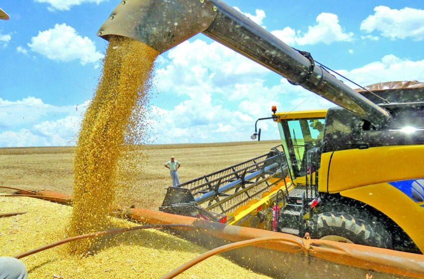 Região de Ivaiporã deve colher mais de 10 milhões de sacas de soja