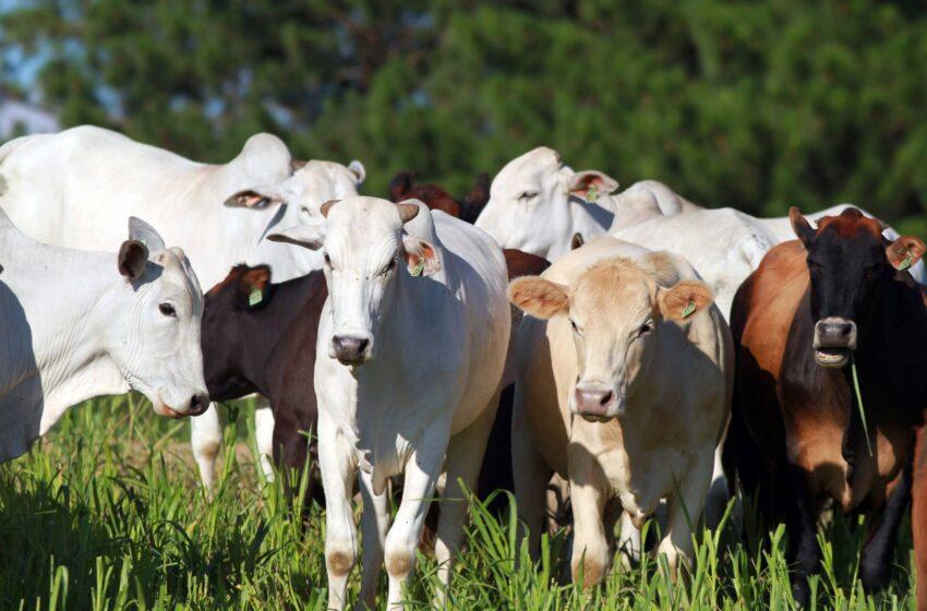 Preço da arroba bovina no Paraná subiu 53% nos últimos 12 meses