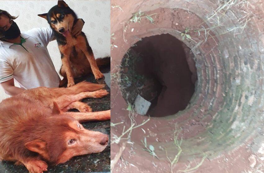 Cães desaparecidos foram encontrados dentro de poço em Borrazópolis