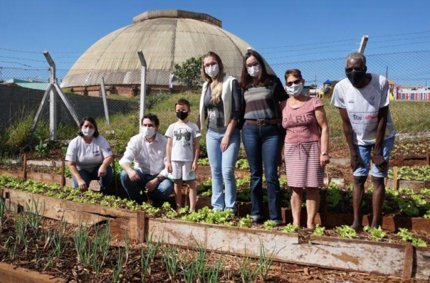 Em Apucarana, horta comunitária para pacientes funciona em área de UBS