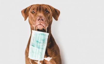 Estudo aponta que 13% dos animais com tutores infectados testam positivos para covid-19