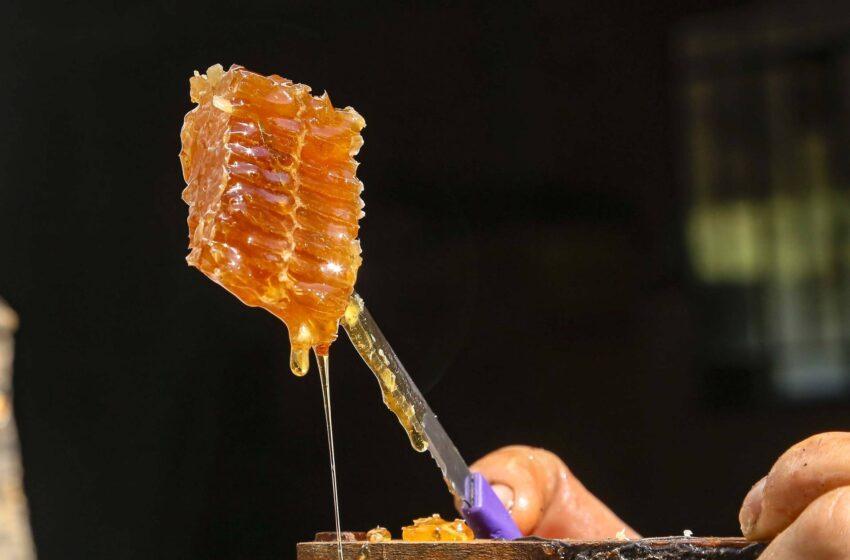 Puxado por Ortigueira, Paraná alcança a liderança na produção de mel
