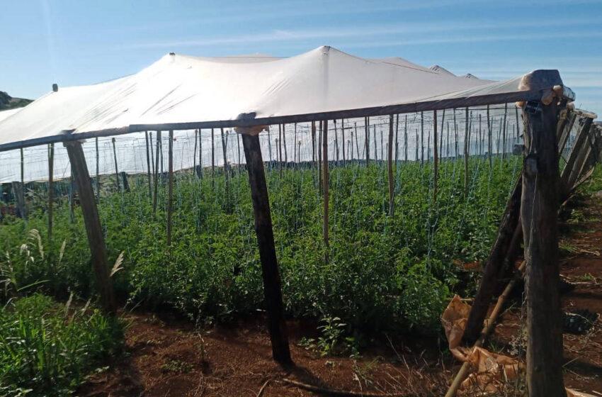Transferência de renda melhora a produção de agricultores familiares
