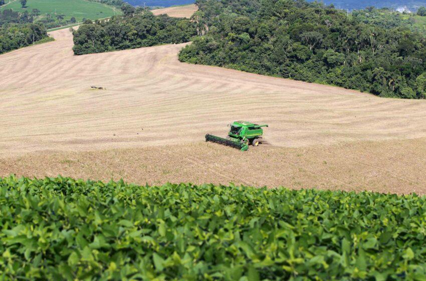 Paraná deve produzir 40,6 milhões de toneladas de grãos na safra 2020/2021