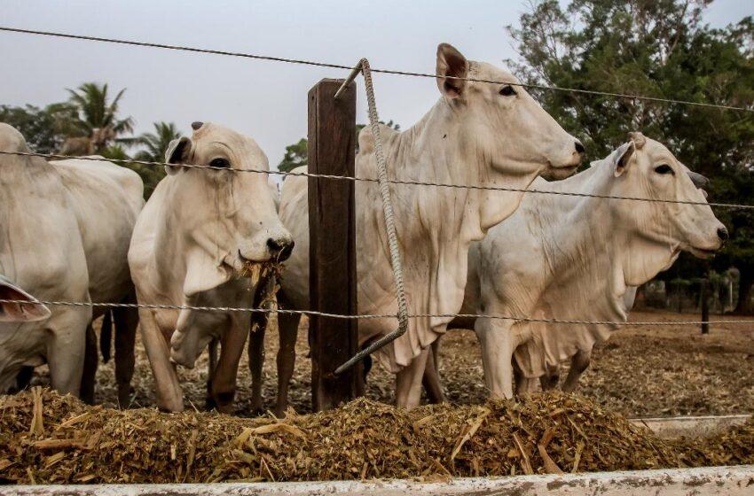 Três cabeças de gado são furtadas de propriedade rural em Rosário do Ivaí