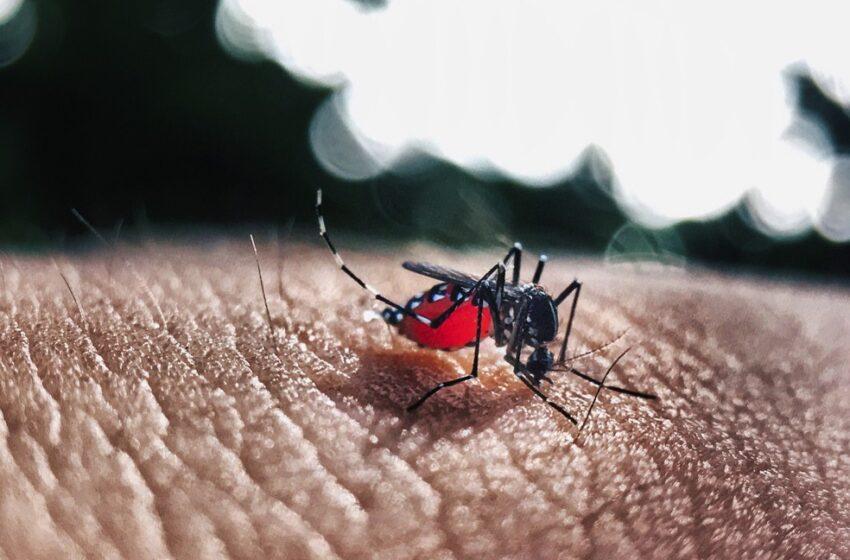 Casos de dengue cresce no Paraná: Kaloré segue liderando números na região