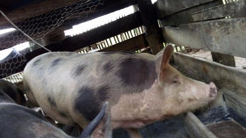 Propriedade Rural de Rosário do Ivaí é alvo de furto na madrugada