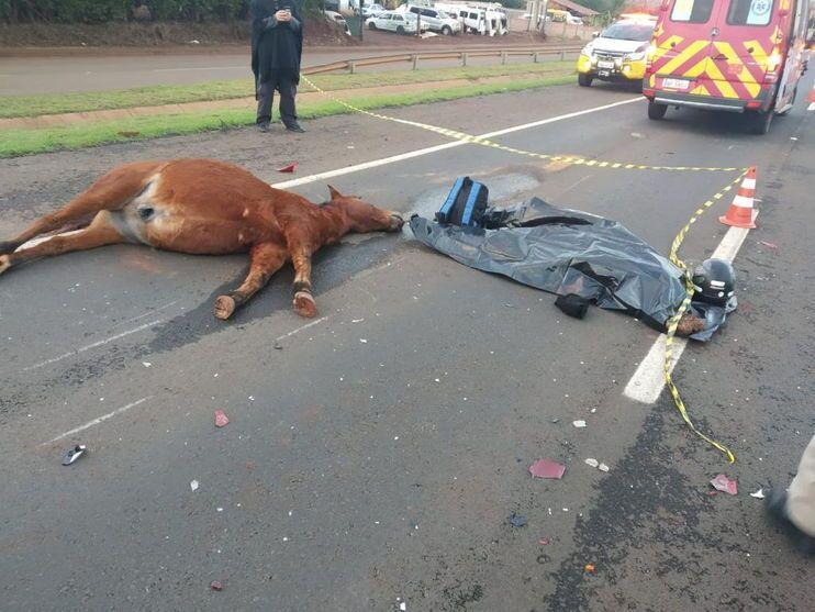 Motociclista morre após atropelar cavalo entre Londrina e Tamarana