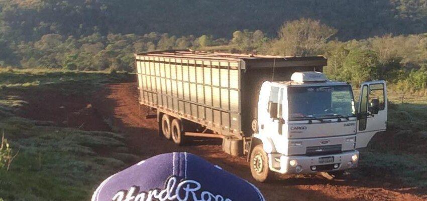 Bandidos roubam caminhão de abatedouro de São João do Ivaí e levam 20 cabeças de gado