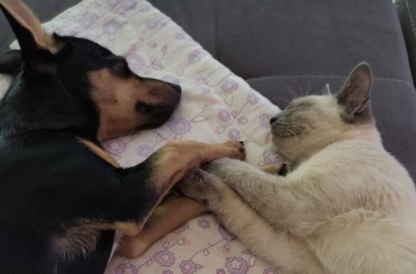 Região: Cão e gato adotados viram melhores amigos e dormem de 'mãos dadas'