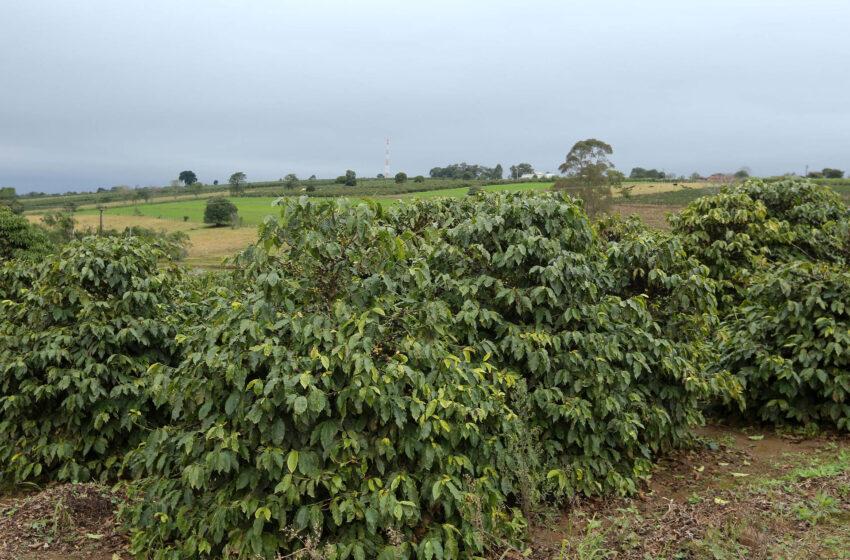 Estado emite alerta de geada para a região cafeeira do Paraná