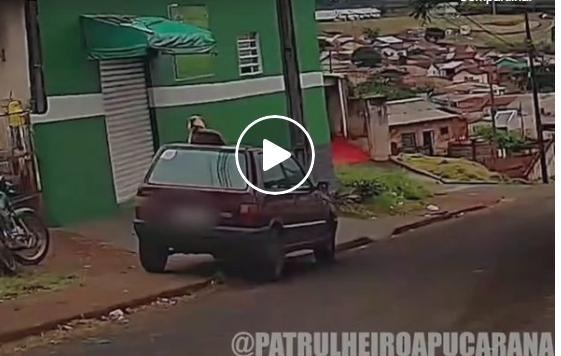 PM de Apucarana flagra cachorro 'relaxando' em cima de carro