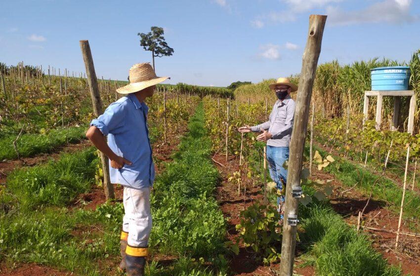 Departamento de Agricultura e Sebrae fazem parceria para qualificar e incentivar produtores rurais de Ivaiporã