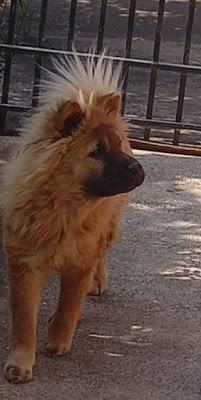 Animal desaparecido em Borrazópolis