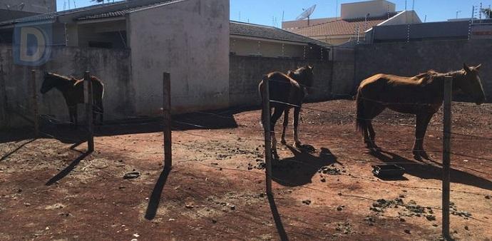 GM flagra maus-tratos contra cavalos em Arapongas