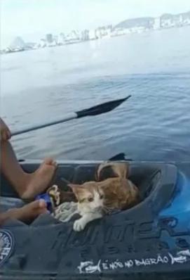 Gato jogado de ponte é salvo por pescadores