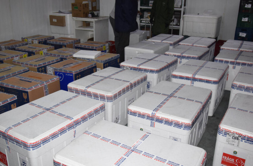 Remessa com 366.300 doses de vacinas contra a Covid-19 chega nesta quinta-feira ao Paraná