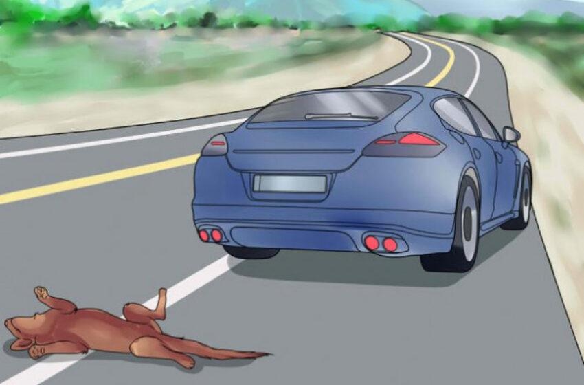 Motoristas deverão prestar socorro a animais atropelados