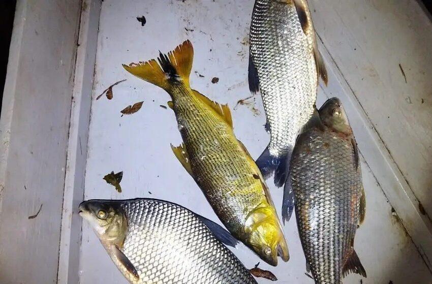 REGIÃO – Pescadores flagrados no Rio Ivaí são multados por pesca ilegal