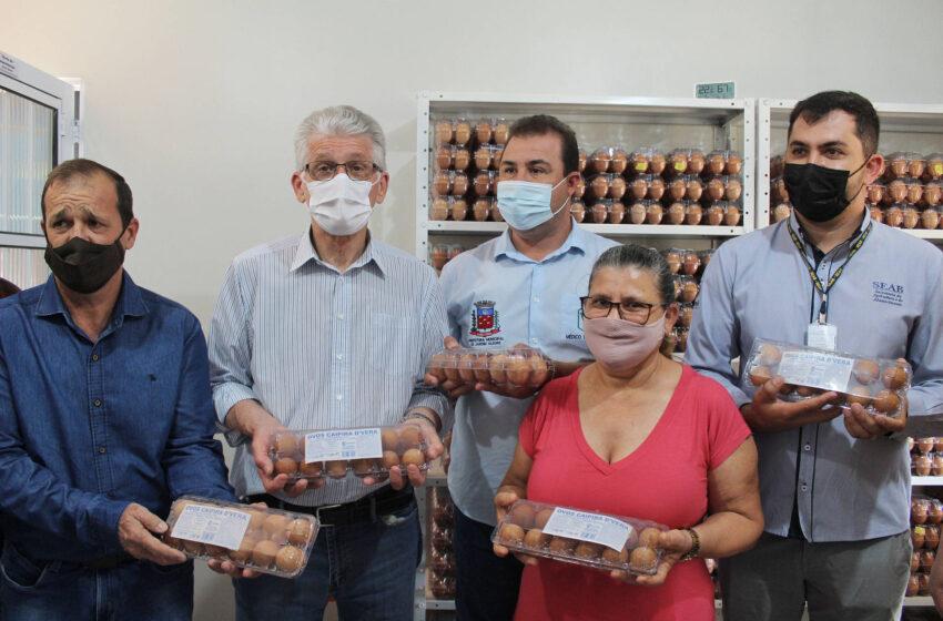 VALE DO IVAÍ – Agricultura familiar ganha impulso com apoio do Governo do Estado