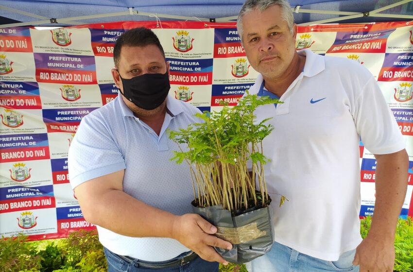 Rio Branco do Ivaí doa mudas de árvores