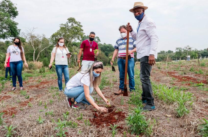 APUCARANA – Parque da Raposa recebe o plantio de 1.300 árvores