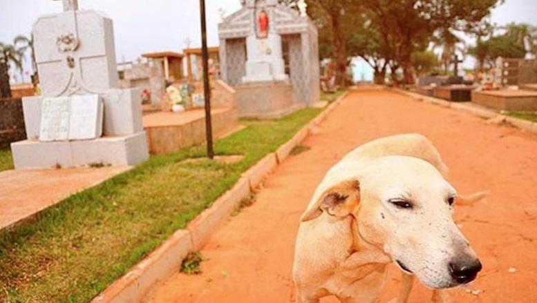 """""""Rambo"""" morou no cemitério ao lado do túmulo do ex dono. Agora, ele também lá foi enterrado"""