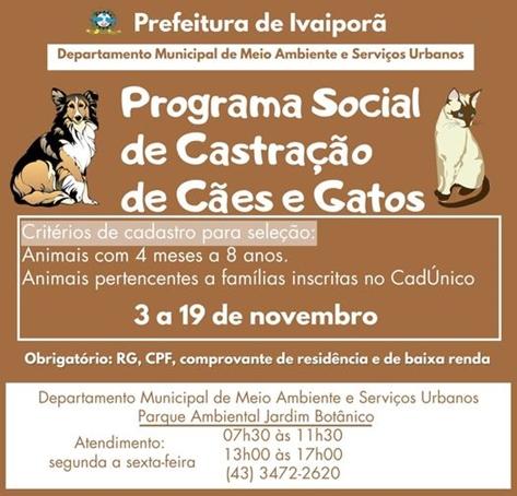 Castração de cães e gatos em Ivaiporã