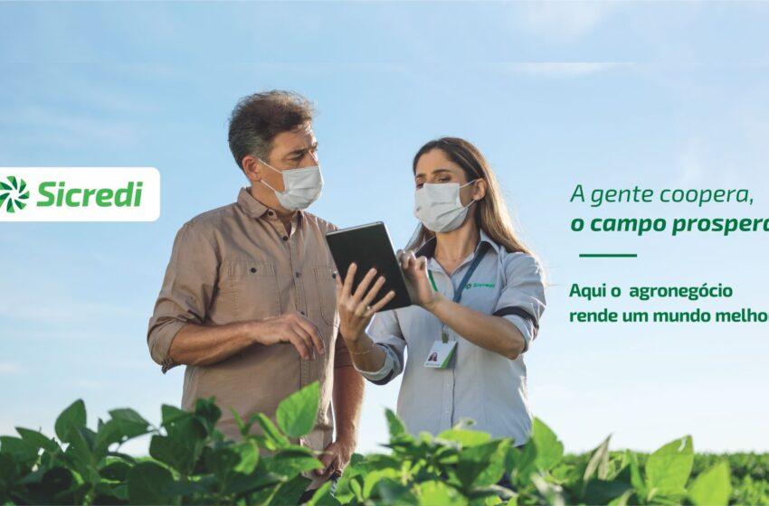 Gestão de risco no campo: Sicredi registra crescimento de 31% nas contratações de apólice no seguro agrícola em 2021